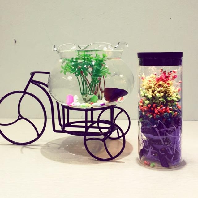 Bể cá mini xe đạp 99