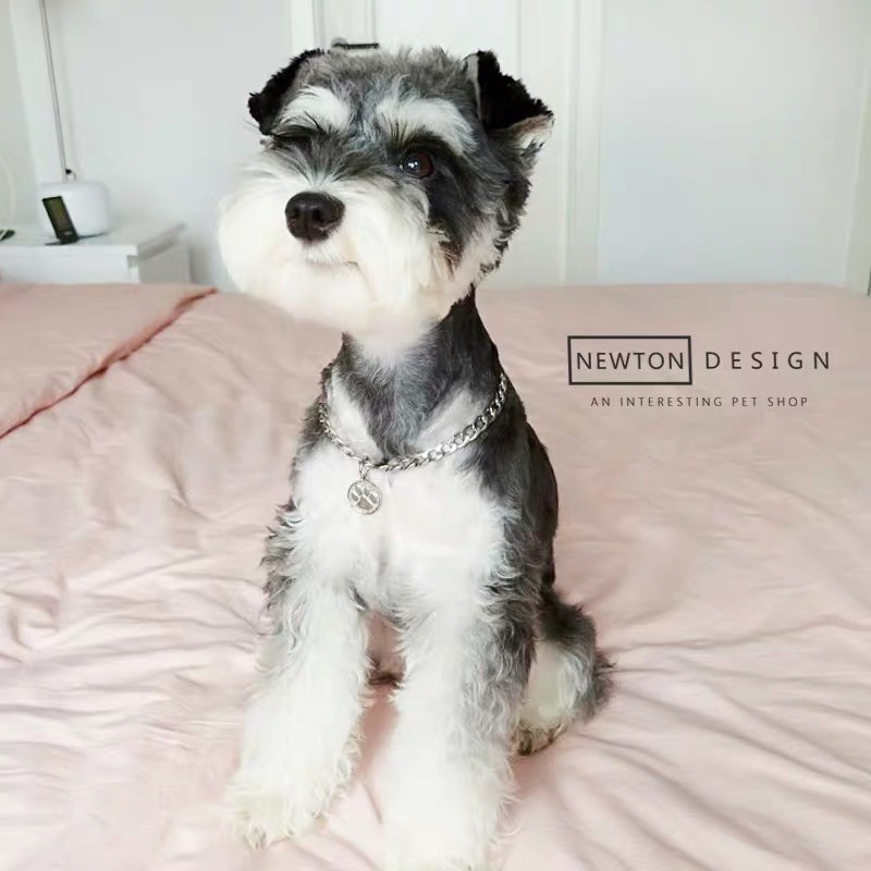 Vòng cổ xích nhỏ hình trái tim siêu cute cho thú cưng