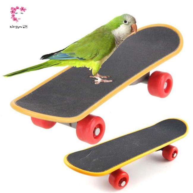 Funny Mini Parrots Skateboard Training Playing Interaction Toy