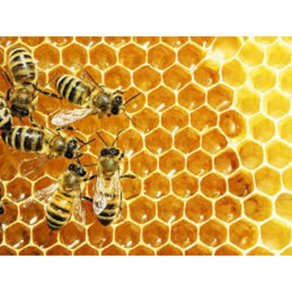 500ml Mật Ong tự nhiên- đắp mặt nạ đẹp da - thực phẩm tốt cho sức k