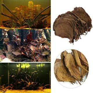 [ 4 LÁ ] Lá Bàng phơi khô tự nhiên FREESHIP giưỡng cá betta và cá cảnh nhiều công dụng thumbnail
