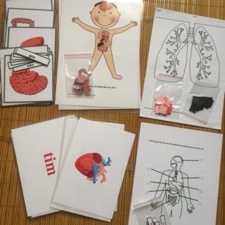 Đồ chơi sinh học: Học liệu các bộ phận bên trong cơ thể