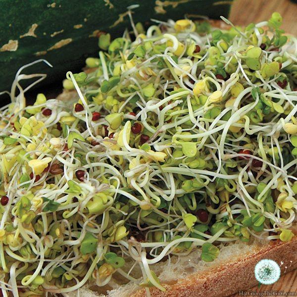10g Hạt Giống Rau Mầm Súp Lơ (Brassica oleracea) - 3474938 , 1039831876 , 322_1039831876 , 9000 , 10g-Hat-Giong-Rau-Mam-Sup-Lo-Brassica-oleracea-322_1039831876 , shopee.vn , 10g Hạt Giống Rau Mầm Súp Lơ (Brassica oleracea)