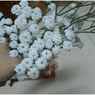 Hoa sao trắng PU cao cấp