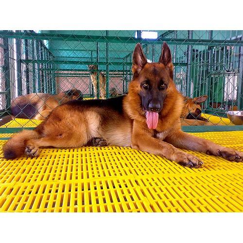 (3 loại ) Lót sàn chuồng chó dạng nhựa dùng ghép sàn chuồng chó mèo hoặc làm tấm sàn ghép cho thú cưng