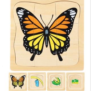 Giáo cụ Montessori – xếp hình sinh trưởng của bướm