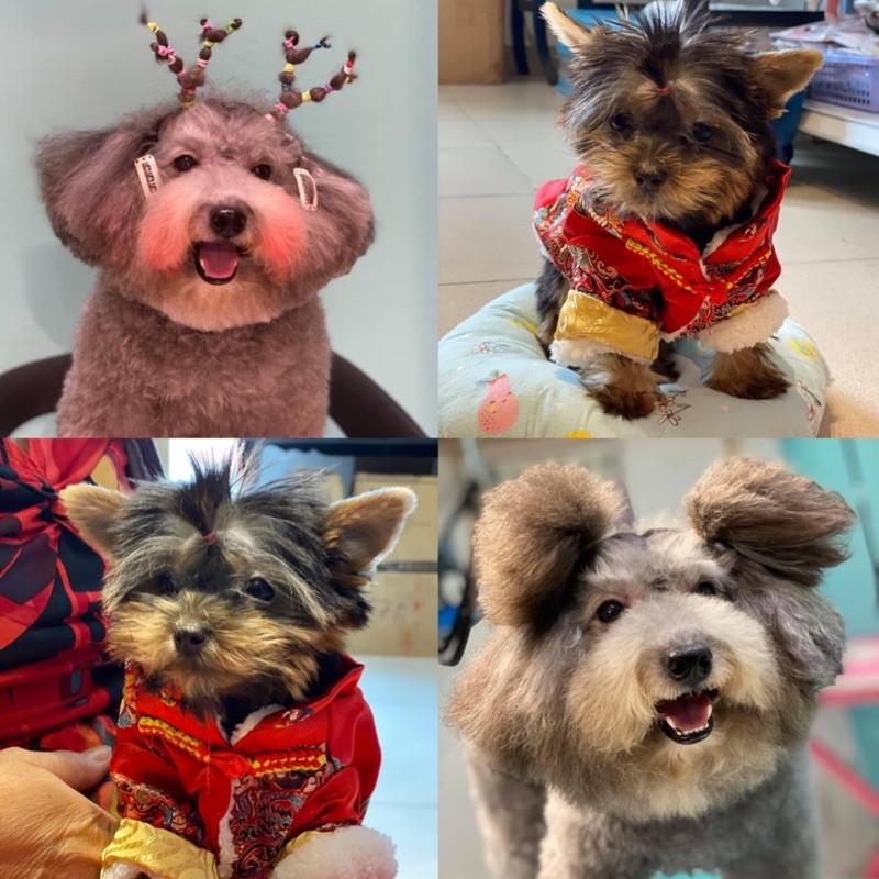 [Mã 267FMCGSALE giảm 8% đơn 500K] Chun buộc tóc cho thú cưng