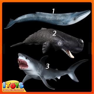 Mô hình động vật biển hoang dã, đồ chơi mô hình động vật cho trẻ em, ITOYS