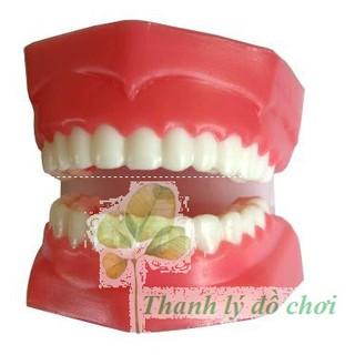 Mô hình hàm răng – Thực hành cuộc sống