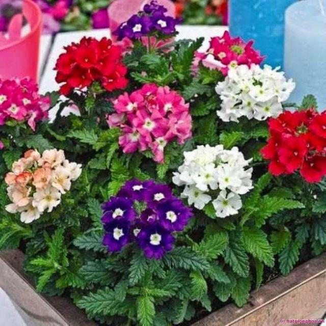 Gói hạt giống, vật dụng làm vườn khách đặt - 3490542 , 1203823521 , 322_1203823521 , 290000 , Goi-hat-giong-vat-dung-lam-vuon-khach-dat-322_1203823521 , shopee.vn , Gói hạt giống, vật dụng làm vườn khách đặt