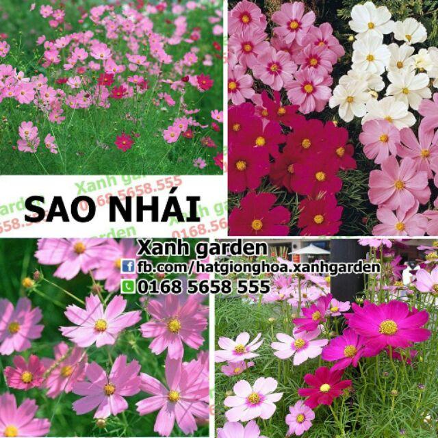 Hạt giống Sao nhái, hoa bướm - 2704131 , 59307283 , 322_59307283 , 45000 , Hat-giong-Sao-nhai-hoa-buom-322_59307283 , shopee.vn , Hạt giống Sao nhái, hoa bướm