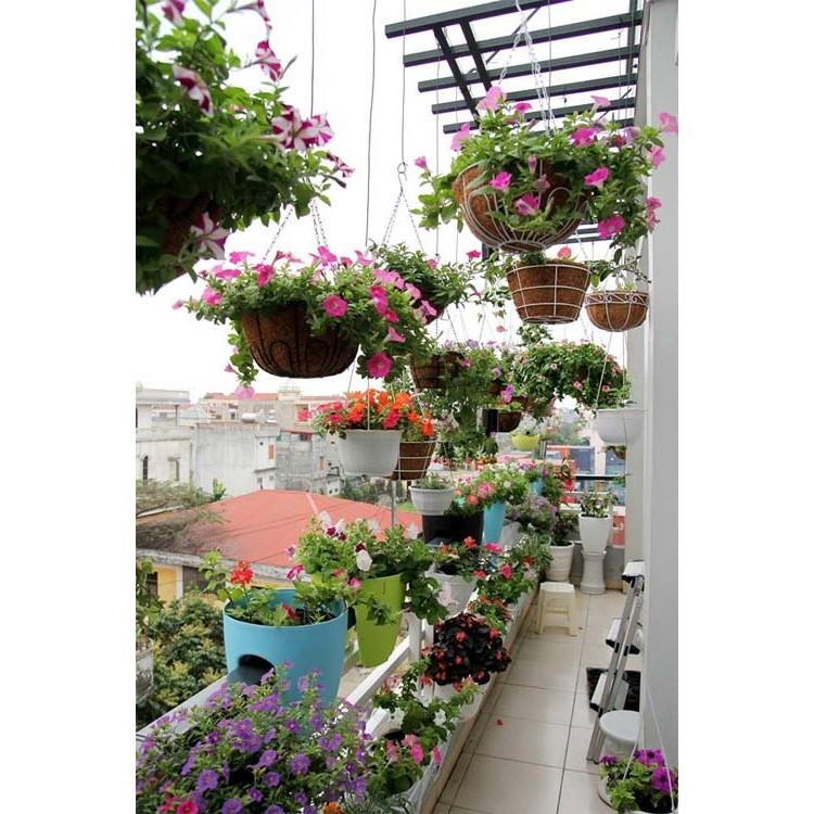 COMBO 10 loại hạt giống hoa ban công nở quanh năm hoa ban công 02