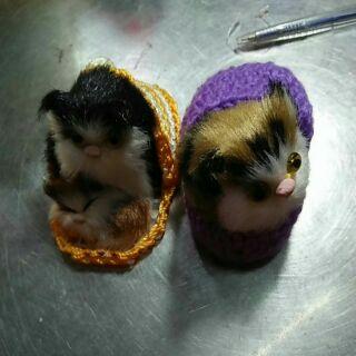 Cặp mèo