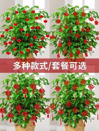 Trang trí cửa hàng điện thoại di động Trung Quốc ngày đầu năm mới thumbnail