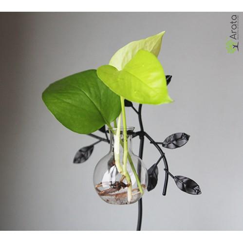 Bình cây trang trí Mini để bàn Arata