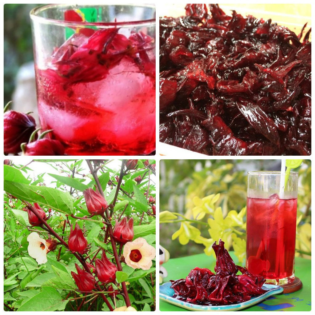 Hạt giống Hoa Atiso đỏ ( Bụt giấm 10 HẠT ) | Shopee Việt Nam