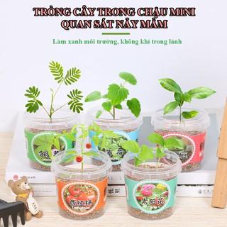 Bộ đồ chơi trồng cây nhựa cho bé thumbnail