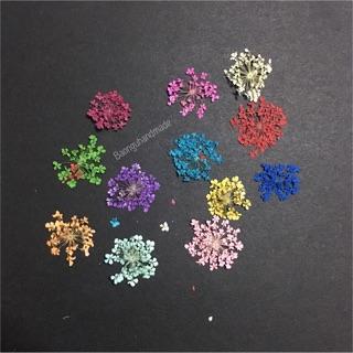 Hoa khô Queen anne's lace trang trí resin