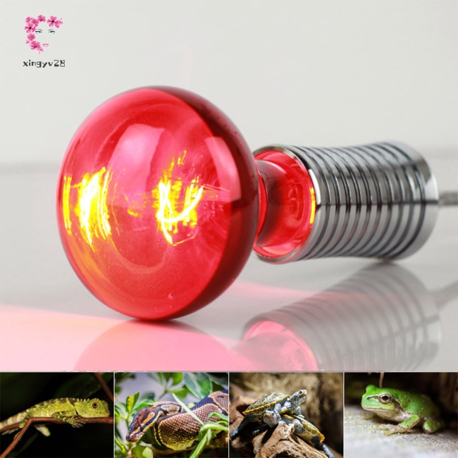 R80 100W Infrared Heating Bulb 220-240V E27 for Lizard Tortoise Snake