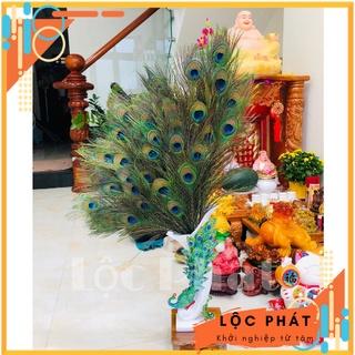 [ HCM ] Lông Công Phong Thuỷ – FREESHIP