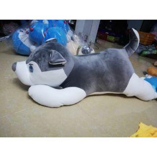 Chó husky 1m