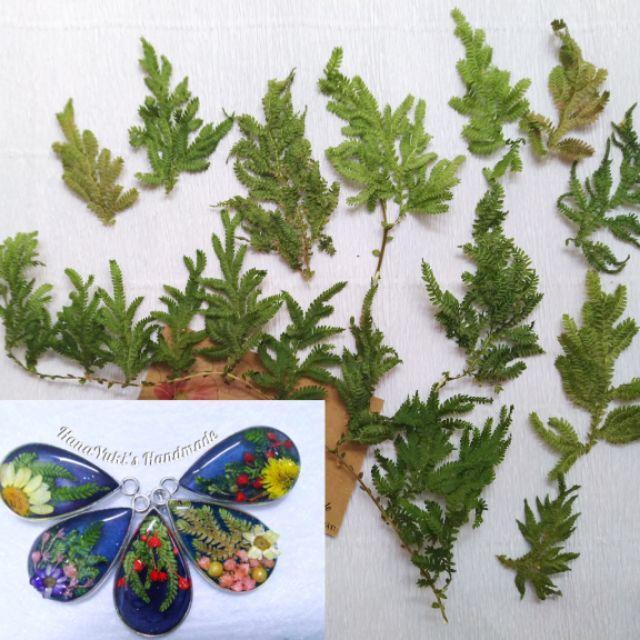 Dương sỉ khô dùng trong Resin, tranh hoa 3D, móng tay, thiệp hoa khô, decor, chụp ảnh ..v…v..