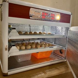 Máy ấp trứng tự động 100 trứng thùng hợp kim cao cấp