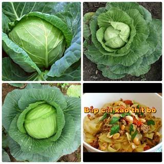 Bán COMBO 5 gói hạt giống cải bắp baby F1 TẶNG 1 phân bón tại Hạt Giống Bốn Mùa