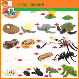 [Mã TOYJAN hoàn 20K xu đơn 50K] Mô hình vòng đời phát triển các con vật kiến, gà, ếch, bướm thumbnail