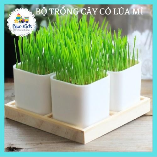 Bộ trồng cây Ecoey Sinh Học, tự làm chậu trồng cây Ecoey cỏ lúa mì, kèm hạt giống và đất