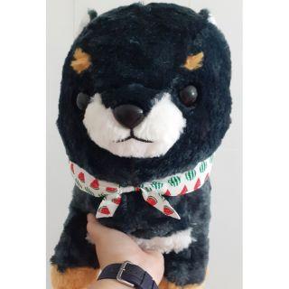 Chó shiba Amuse Nhật Bản