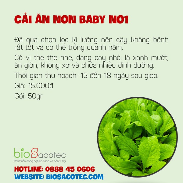 Cải ăn non Baby No 1
