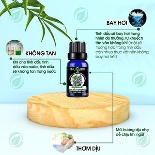 Tinh dầu Hương thảo Rosemary AROMA, tinh dầu thơm phòng, nguyên chất tự nhiên 4