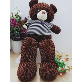 Gấu Teddy khổ vải 1m8 Cao 1m6