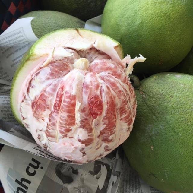 Bưởi da xanh bến tre bao ăn