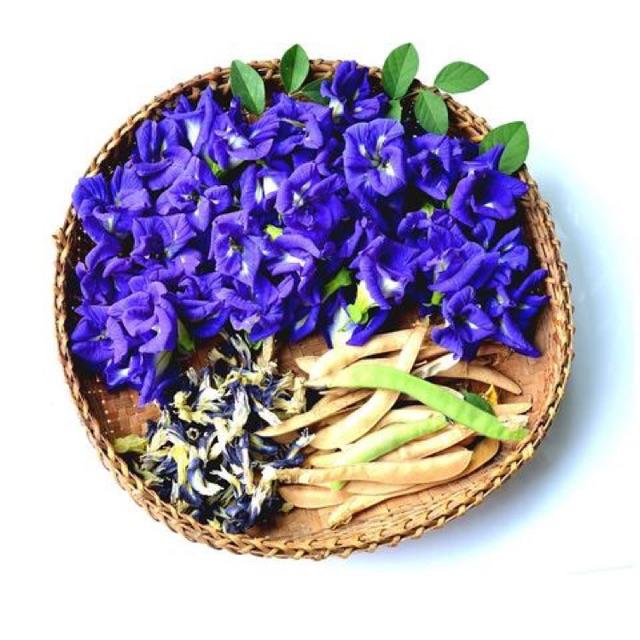 Trà hoa đậu biếc Thá