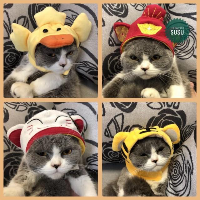 Mũ cho chó mèo