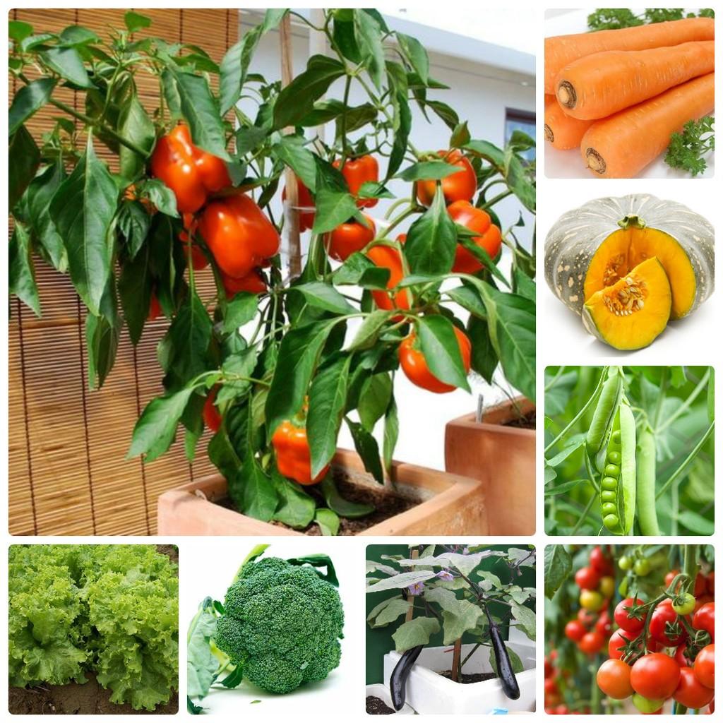 COMBO hạt giống rau hạt giống hoa tự chọn apple - 2642612 , 345123399 , 322_345123399 , 564000 , COMBO-hat-giong-rau-hat-giong-hoa-tu-chon-apple-322_345123399 , shopee.vn , COMBO hạt giống rau hạt giống hoa tự chọn apple