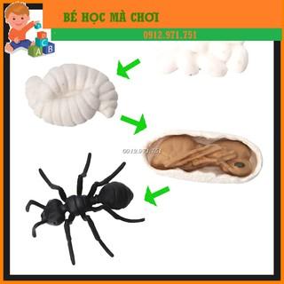Mô hình Vòng đời của KIẾN - Ant life cycle thumbnail
