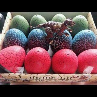 Hộp 12quả trứng