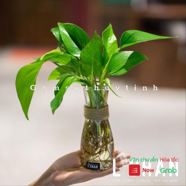 [Mã SKAMPUSHA7 giảm 8% tối đa 50K đơn 250K] Lọ hoa mini thủy tinh / Bình cắm hoa thủy tinh tặng kèm dây dừa trang trí