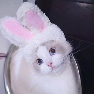 Thời Trang Chó Mèo mũ tai thỏ Cospley siêu đáng yêu thumbnail