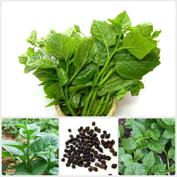 Hạt giống mồng tơi cao sản gói 20 gram xuất xứ Việt Nam | Shopee Việt Nam