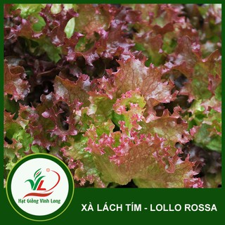Hạt giống xà lách tím Lollo Rossa – 2g