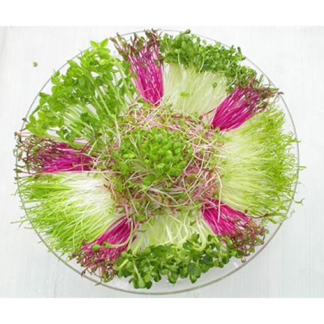 Hạt giống Rau Mầm Cải Xoong ( 20 gram ) - 2618594 , 17719525 , 322_17719525 , 25000 , Hat-giong-Rau-Mam-Cai-Xoong-20-gram--322_17719525 , shopee.vn , Hạt giống Rau Mầm Cải Xoong ( 20 gram )