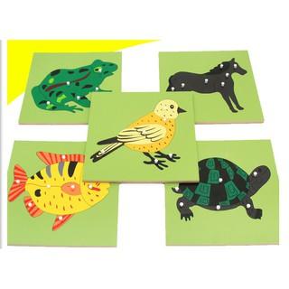 Giáo cụ Montessori ghép hình sinh học