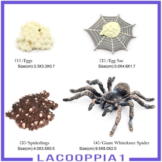 [LACOOPPIA1] Nature Insects Life Cycles Growth Model Giant Whiteknee Spider