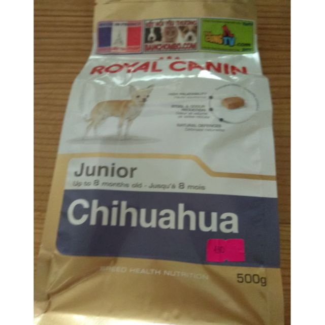 Royal chihuahua junior