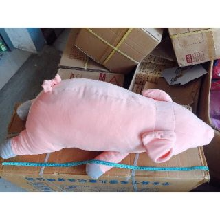Lợn hồng siêu cute