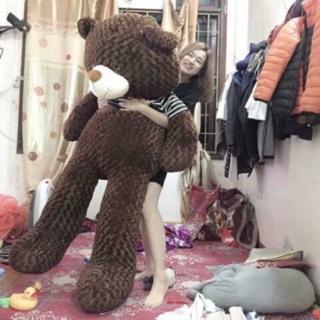 Gấu teddy 1.7m